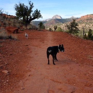 Rosie and Butters on the trail.