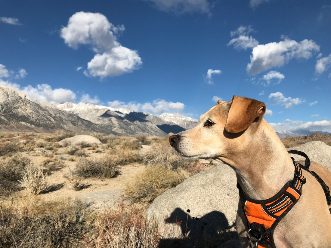 dog, camping with dogs, sky, boulders